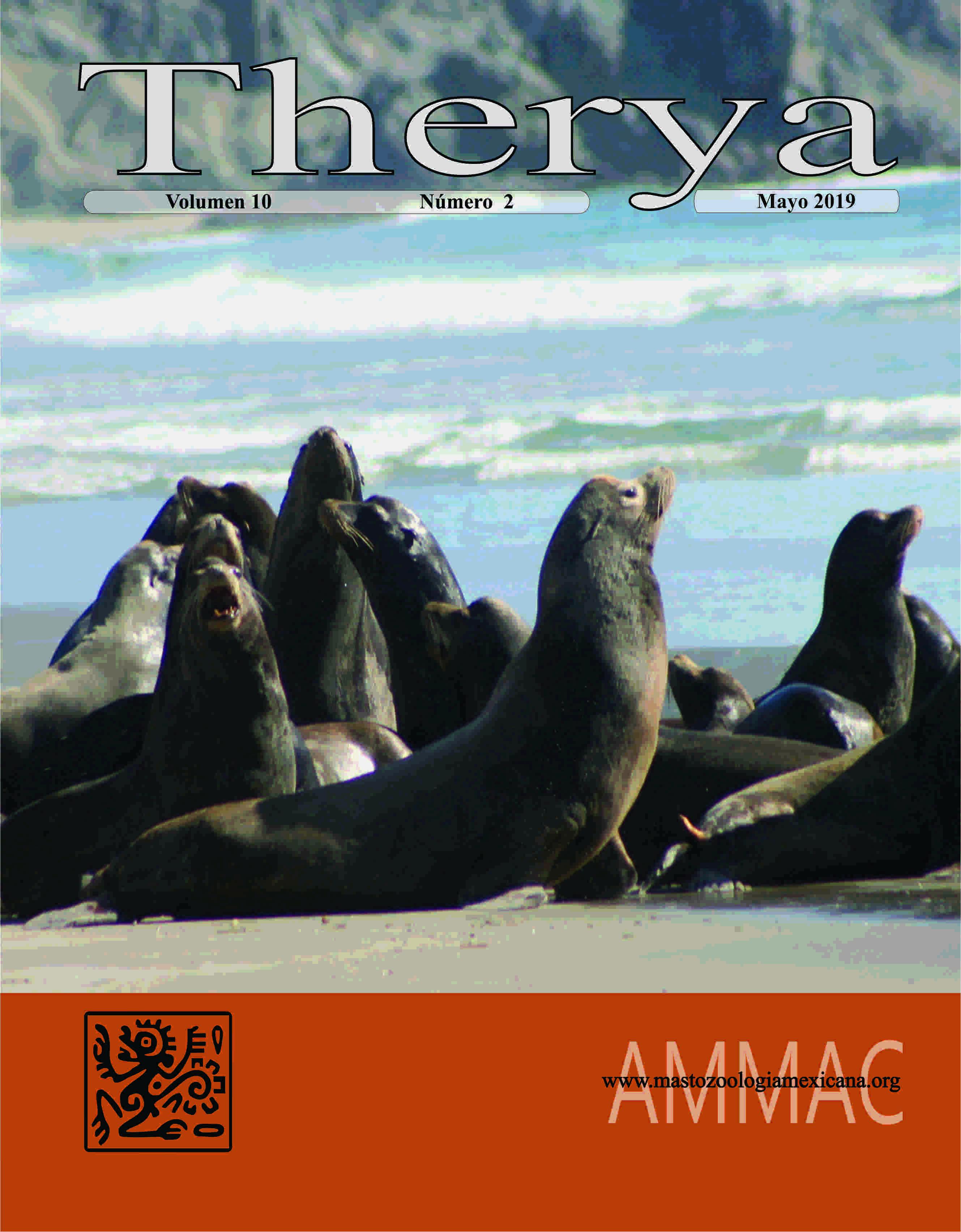 Colonia reproductiva de lobos marino (Zalopus californicus) en la costa del Pacífico de la isla Margarita, Baja California Sur.  Se observa como el macho del grupo vigila y se coloca entre los extraños al grupo y las hembras con crías (Fotografía Sergio T